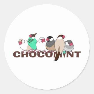 Chocolate mint java sparrow