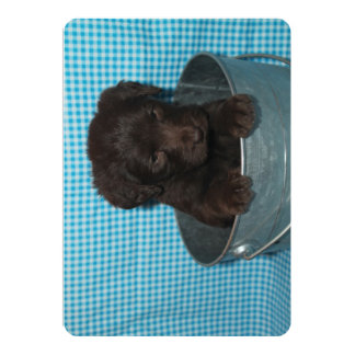 Chocolate Puppy Cards Blank Inside