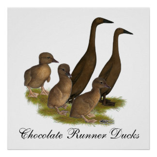 Chocolate Runner Duck Family Poster