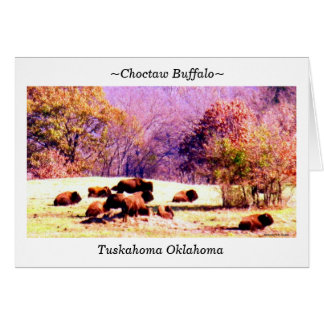 ~Choctaw Buffalo~ Card