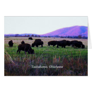 Choctaw Greeting Cards ( Yunnush )