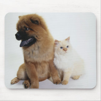 Chow Chow and a White Cat Sitting Together Mousepads
