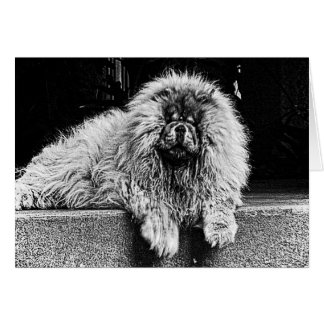 Chow Chow Dog on Porch, Black and White Card