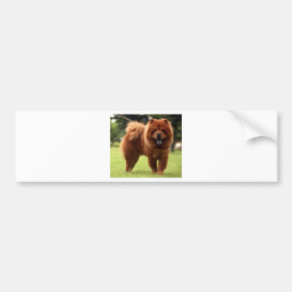 Chow Chow Dog Poses Bumper Sticker