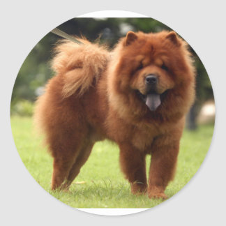 Chow Chow Dog Poses Classic Round Sticker
