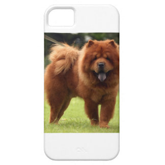 Chow Chow Dog Poses iPhone 5 Cases