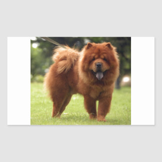 Chow Chow Dog Poses Rectangular Sticker