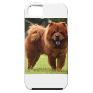 Chow Chow Dog Poses Tough iPhone 5 Case
