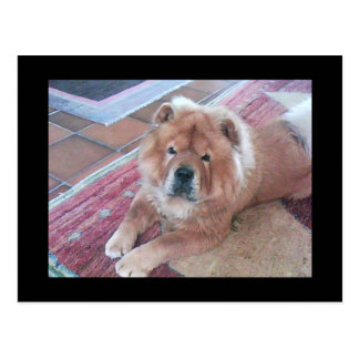 Chow Chow Dog Post Card