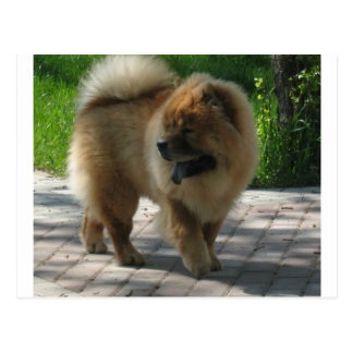 chow chow full.png postcard