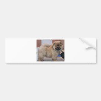 chow chow pup.png bumper sticker