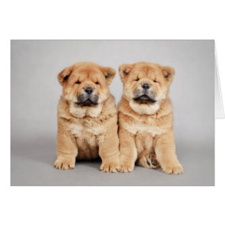 Chow chow puppies card