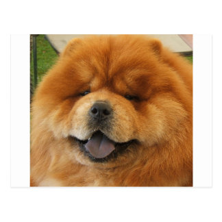 Chow Chow Rescue Postcard