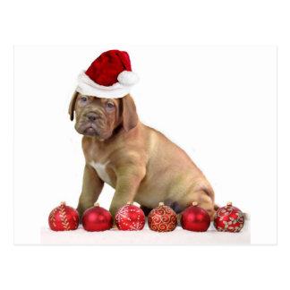 Christas Dogue de Bordeaux puppy Postcard