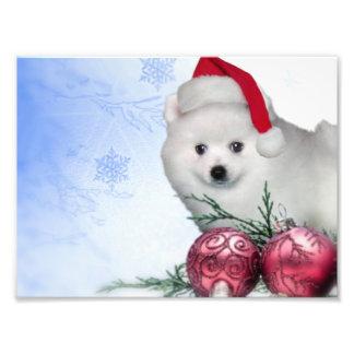 Christmas American Eskimo dog Photographic Print