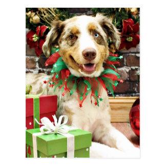 Christmas - Australian Shepherd - Cash Postcard