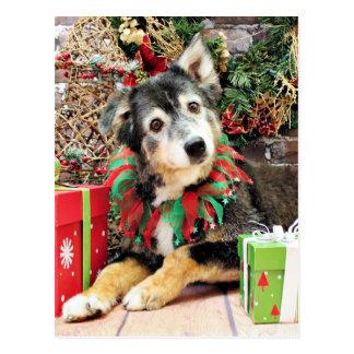 Christmas - Australian Shepherd - Gunnie Postcard