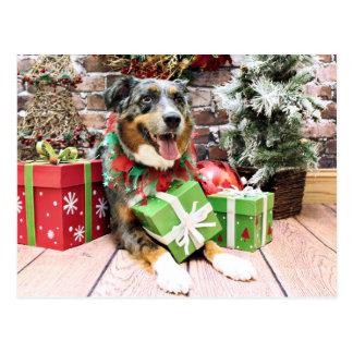 Christmas - Australian Shepherd - Kiko Postcard