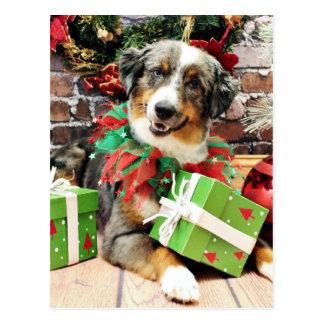 Christmas - Australian Shepherd - Loki Postcard