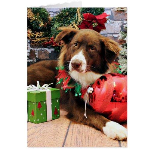 Christmas - Australian Shepherd - Molly Greeting Card