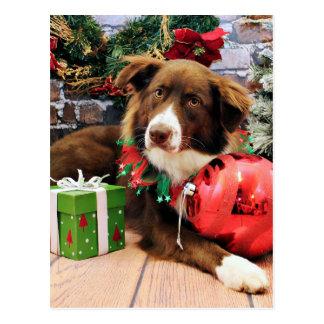 Christmas - Australian Shepherd - Molly Post Cards