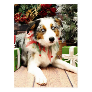 Christmas - Australian Shepherd - Ozzie Postcard