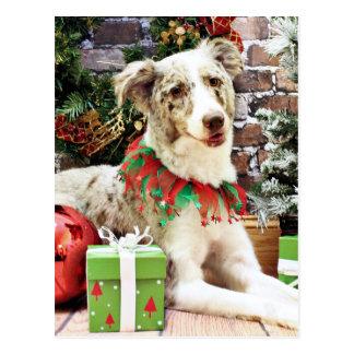 Christmas - Australian Shepherd - Shelby Post Cards