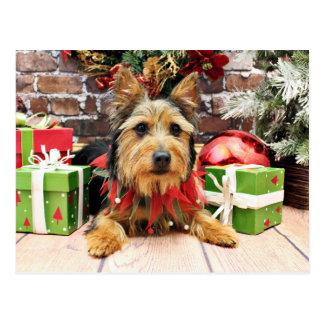 Christmas - Australian Terrier - Leo Post Card