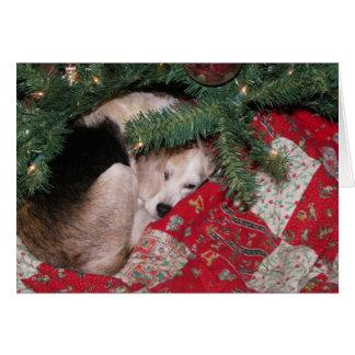 Christmas Beagle Card