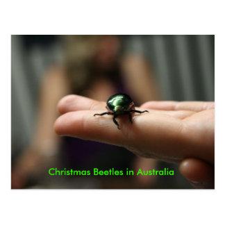 Christmas Beetle Postcards