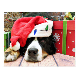 Christmas - Bernese Mountain Dog - Mya Postcard
