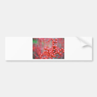 Christmas berries red bumper sticker