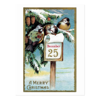 """Christmas Birds"" - 1900 Postcard"