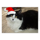 Christmas Black and White Cat