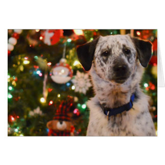 Christmas Blank Card - Dog
