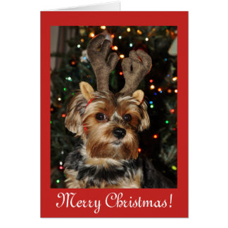 Christmas blessings,Yorkshire terrier dog puppy Card