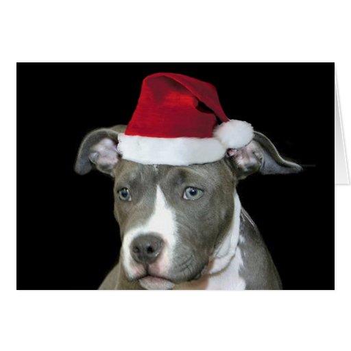 Christmas blue pitbull puppy greeting card