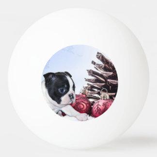 Christmas Boston Terrier Puppy