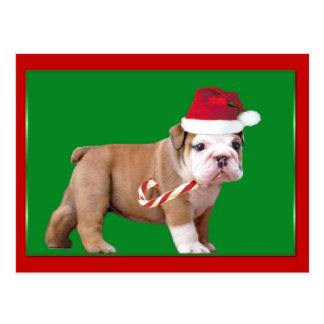 Christmas Bulldog puppy Postcard