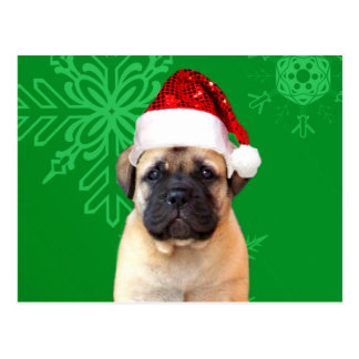 Christmas Bullmastiff puppy Postcard