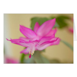 Christmas Cactus - Customized Card