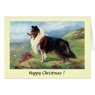 Christmas Card - A Scotch Collie