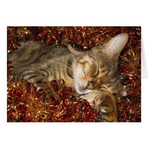 Christmas card - bengal cat