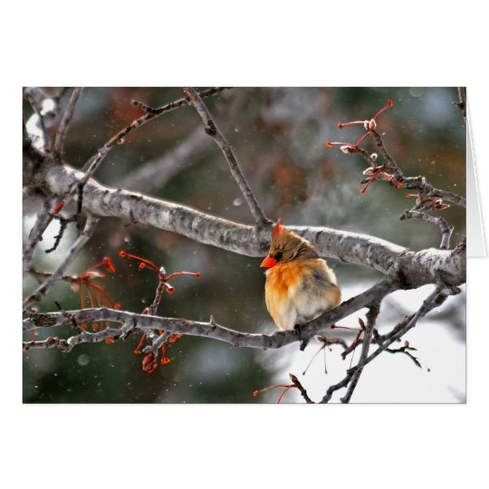 Christmas Card - Cardinal with Snowflakes