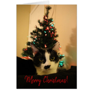 Christmas Card - Lola 2