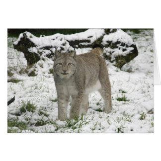 Christmas card - Siberian lynx