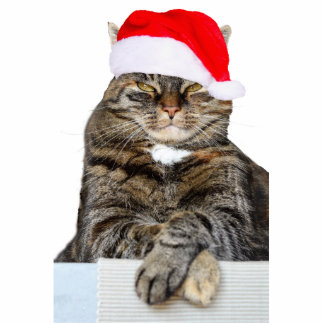 Christmas Cat Humbug Photo Sculpture Ornament