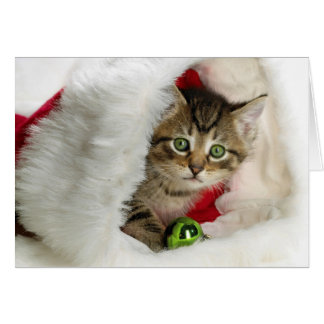 Christmas cat -kitten cat - cute cats card