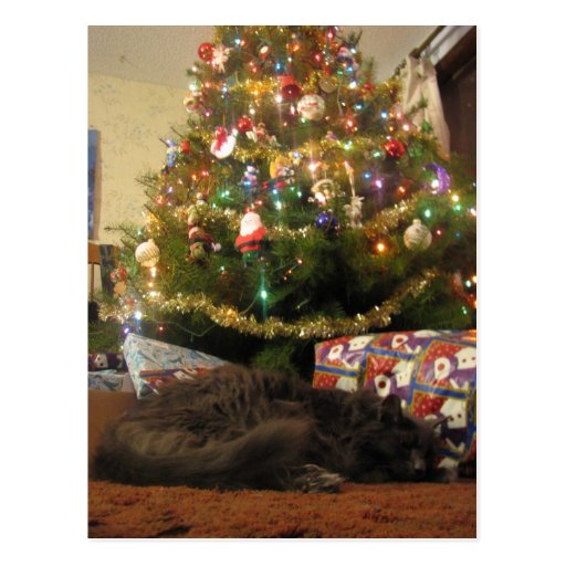 Christmas Cat Post Cards