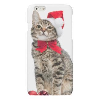Christmas cat - santa claus cat - cute kitten